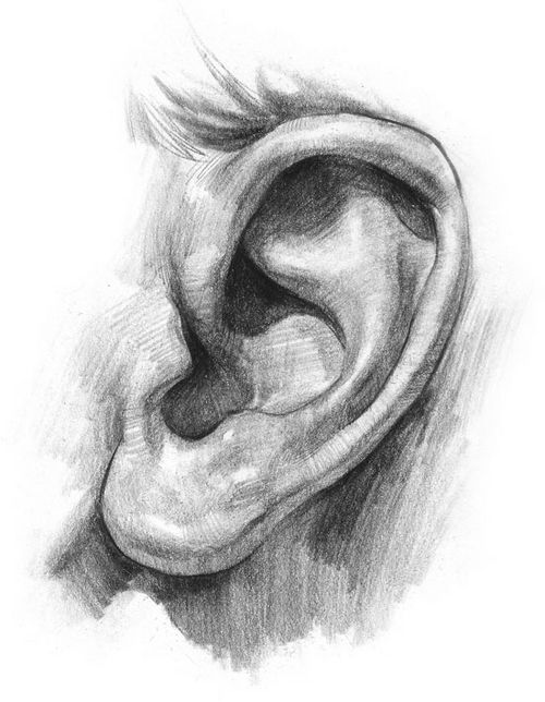 picture - Ear
