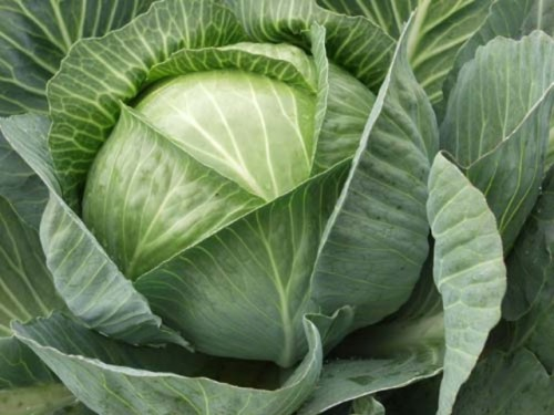 Cabbage in different cuisines: delicious and interesting dishes