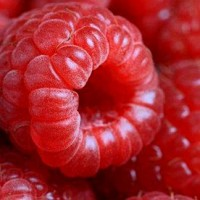 Compote of raspberries
