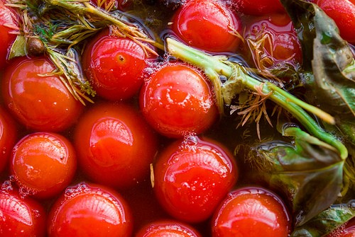 The tomatoes: salt and pickling