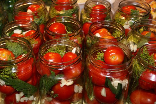 Tomatoes, pickled with mustard, garlic and horseradish