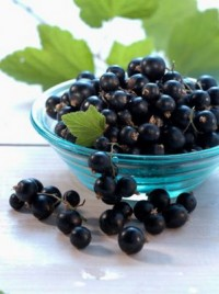 Vitamin infusion of fruits of black and red currants
